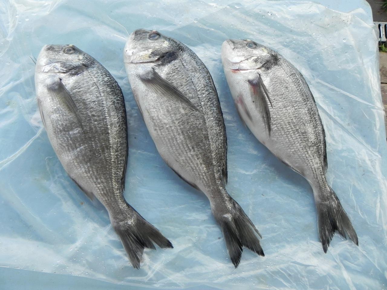 Аргентина рыба картинки