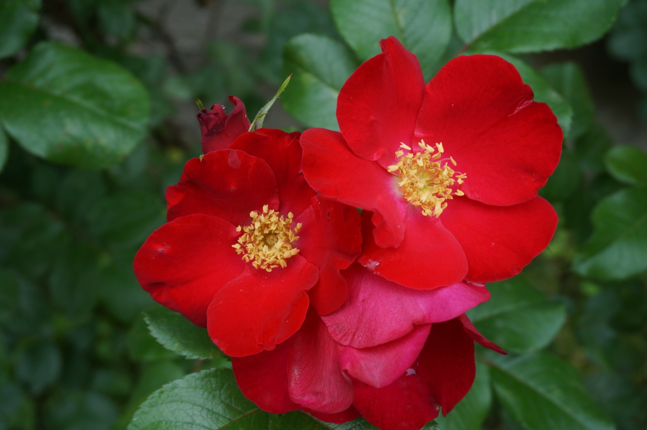 Фото цветка шпорника 31